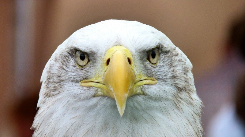 If there was ever anything to keep an eagle eye on, it's your money.